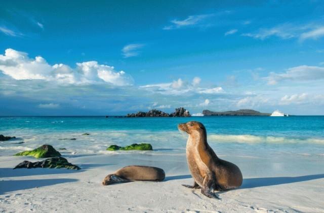 Foca na praia das Ilhas Galápagos