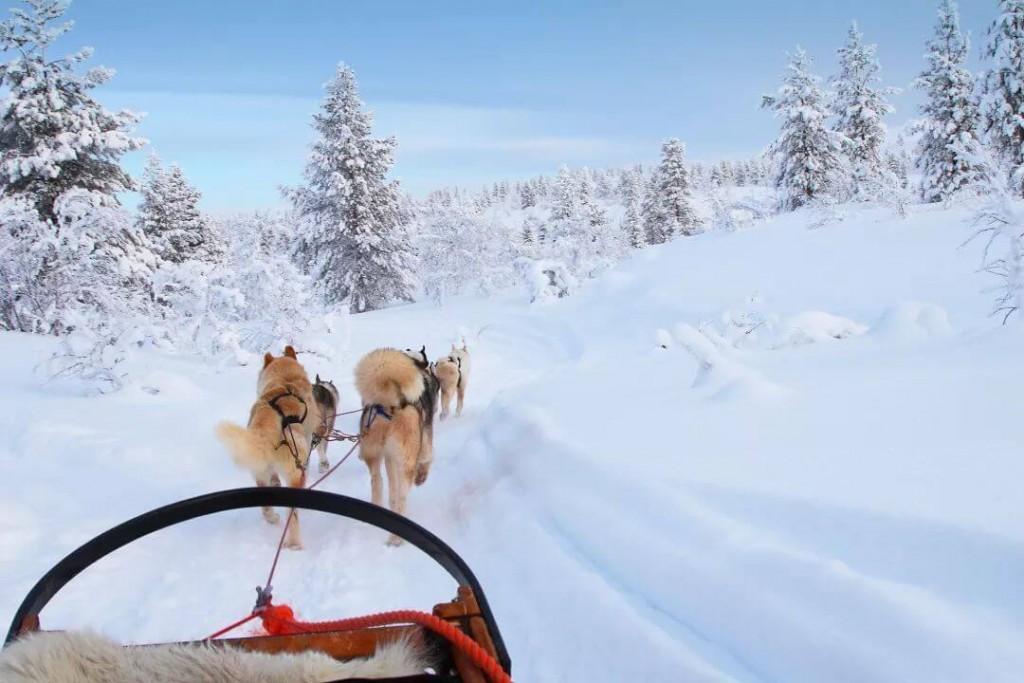 Trenó sendo puxado por cães na neve